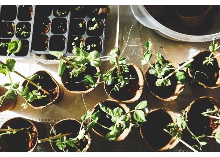 S'occuper de son jardin avant l'été