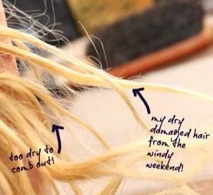 dry damaged hair photo