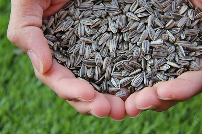 sunflower seeds for younger skin