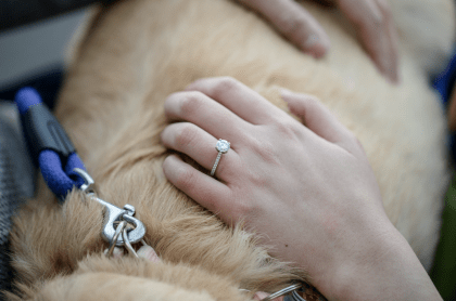 Engagement ring on dogs back
