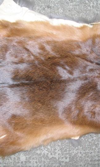 Fur Type
