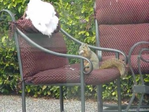 How to keep squirrels from chewing on patio furniture