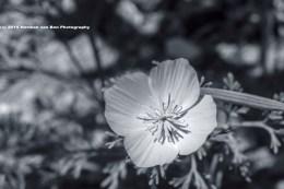 flower10jan15-2