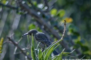 early-bird2