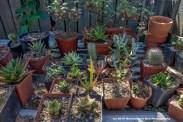 garden_DSC5761