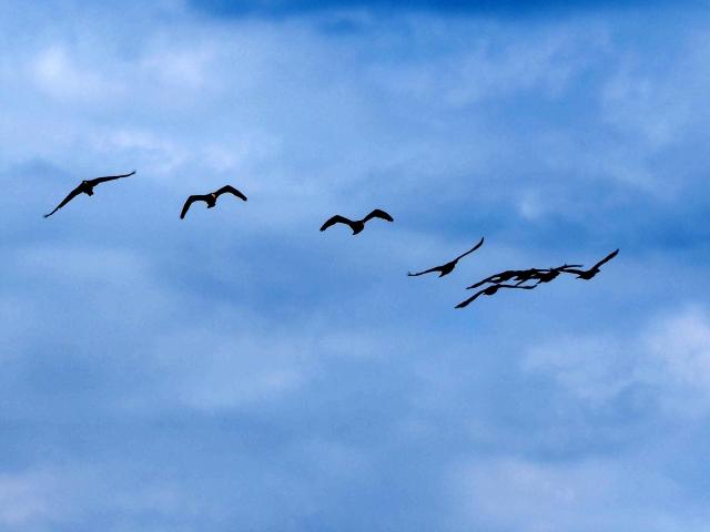 エレコ鳥空の生物