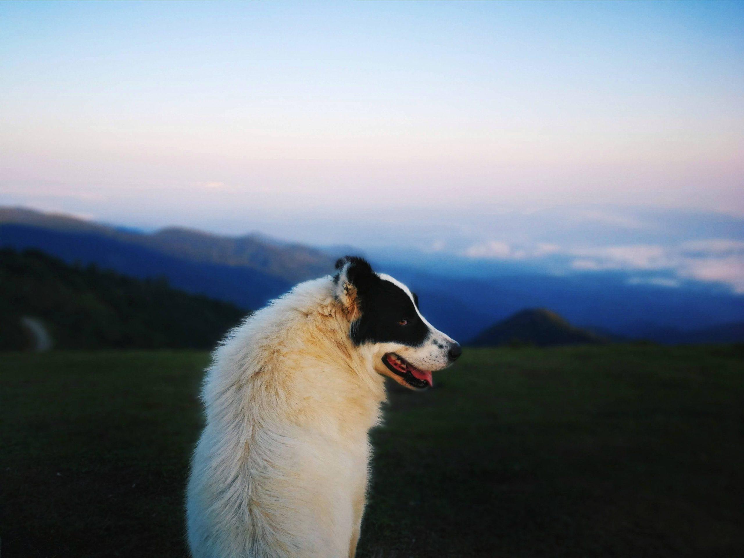 「風」持ち人間の90%は大体こじらせている説〜負け犬人生を脱するには〜