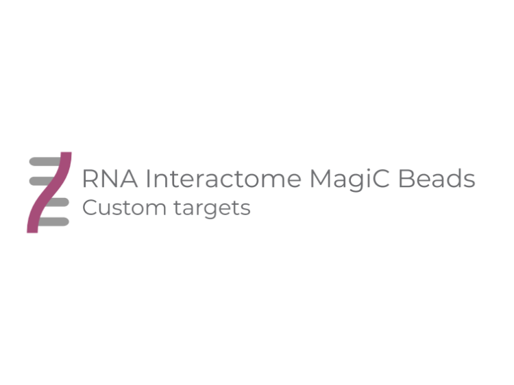 RNA Interactome MagiC Beads - Custom targets