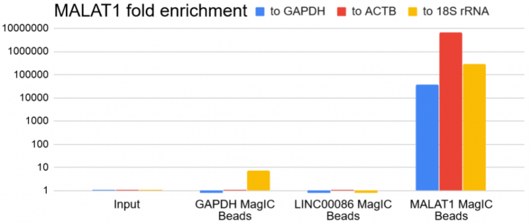 RNA Seq MagIC Beads - MALAT 1 enrichment