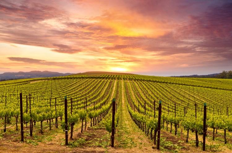 Splendido tramonto nella Napa Valley con i suoi vigneti