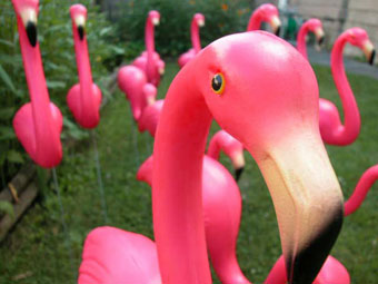 Pink: as in Flamingos