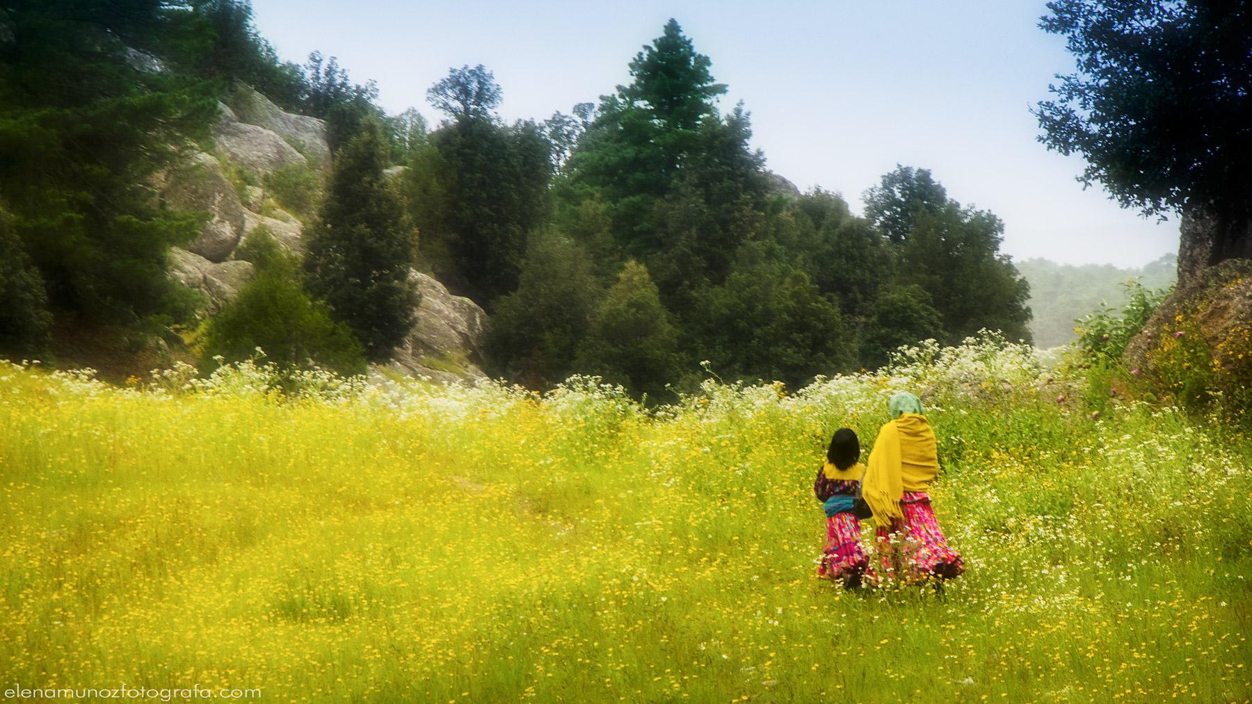 Primavera en Creel