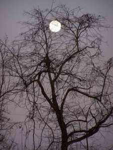 Photo of moon through tree branches