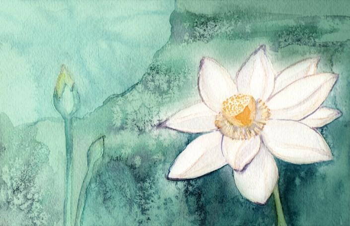 Lotus Full Blossom
