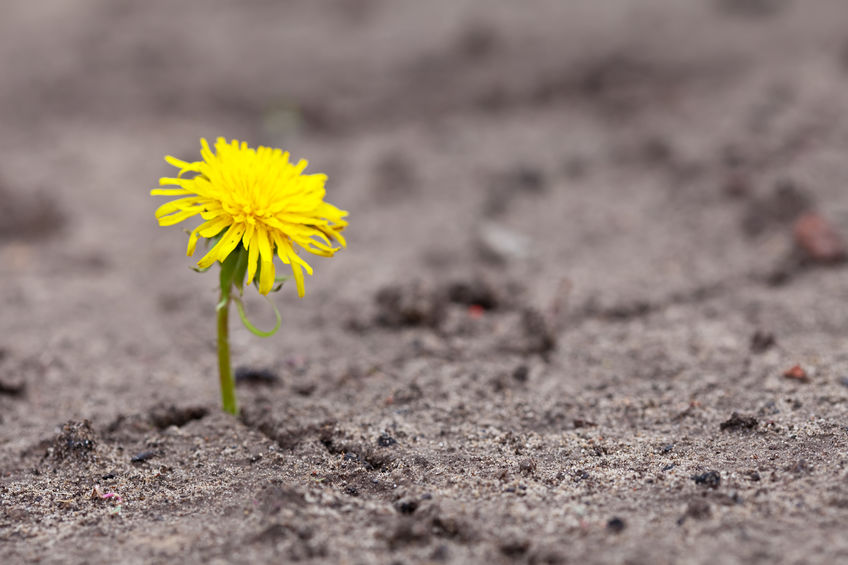 Growing yellow flower sprout in ground