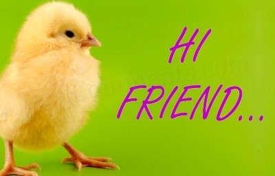 """hi friend chicken graphic - 7 FORMAS DE DIZER """"OI"""" EM INGLÊS"""