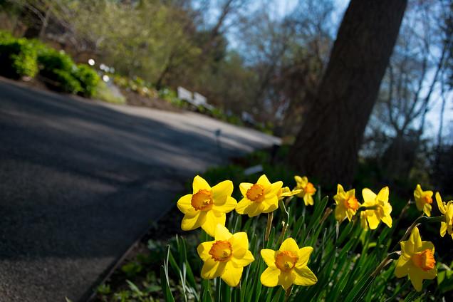 Spring at the Garden