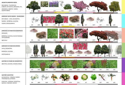 categorization of the different plants used in each zone of specific privacy and timemapping of their year blossom