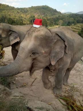 Christmas Ele 2