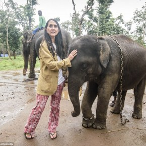 """We Have to Release Them. We Have to Release Them. We Have to Release Them.""  Liz Jones and the Elephants  Part 4"