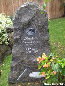 Annabelle the Elephant Immortalized in Stone But Did They Etch the Wrong Year?