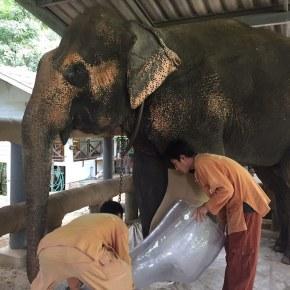 With $100K Donation Miranda Kerr Helps Elephants Injured From Land Mines to Walk Again