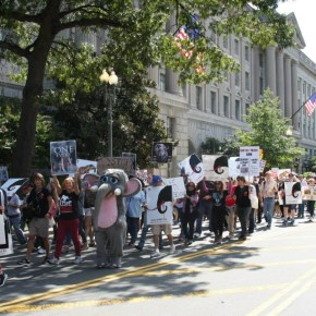 Third Annual International March For Elephants in Washington, D.C., USA Rescheduled for 24 October 2015