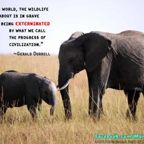 GMFER: What We Need to Realize About Elephants     Part 1