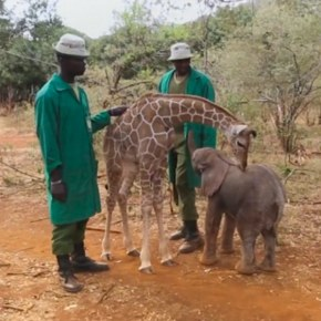 How an Orphaned Baby Elephant Became Inseparable From a Rescued Baby Giraffe