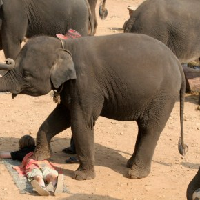 Say It Isn't So : Elephants Giving Massages in Thailand : The Cruelty Behind the Gimmick and No, This is NOT  'One For The Bucket List'