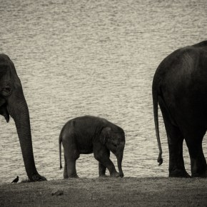Let Us Not Say Goodbye to Our Elephants