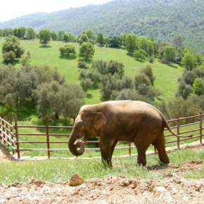 PAWS Launches 'BUCKS FOR BULLS' Campaign & Your Donations Save Bull Elephants