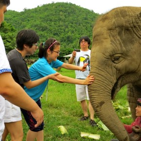 "Elephants Bring Joy to Blind Art Students From Korea at Elephant Nature Park Through a Program Called ""Touching an Elephant"""