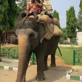 """What You Don't Know Won't Hurt You? : TripAdvisor Effectively Condones the Abuse of Wildlife as They Continue to Book Tours & Realize Profits From """"The World's Cruelest Animal Attractions"""" & Those Attractions Featuring Elephants For Human Entertainment Rank # 1 : Part 1"""