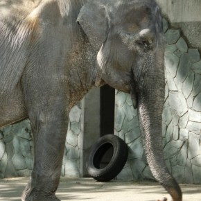 "Our Beloved Hanako ""The Loneliest Elephant in the World"" Has Died in Her ""Concrete Prison"" at the Age of 69 : As Cause of Death Revealed ""Fans"" Gather at the Tokyo Zoo to Remember the Pachyderm One Last Time"