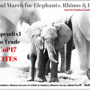 Sound the Trumpets For Our Elephants! Over 145 Cities Plan Global March For Elephants and Rhinos on Saturday 24 September 2016
