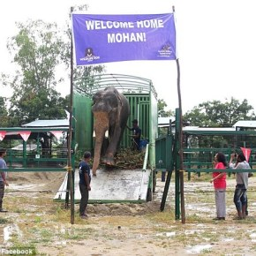 """The Rescue of Mohan the Elephant: How the """"Unluckiest Elephant in the World"""" Became the Luckiest Elephant of Them All : Part 1"""