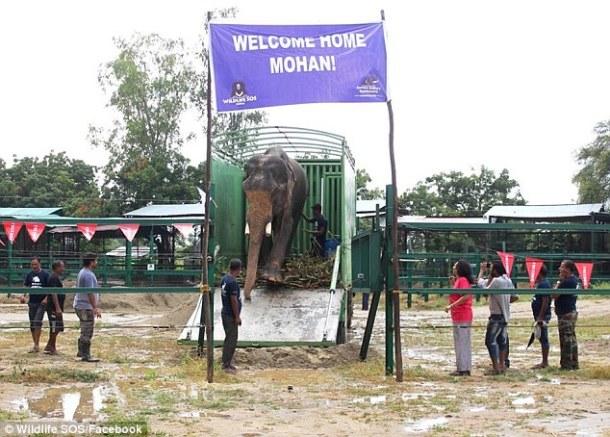 elephant-mohan-rescue-wild-life-sos-facebook-via-daily-mail
