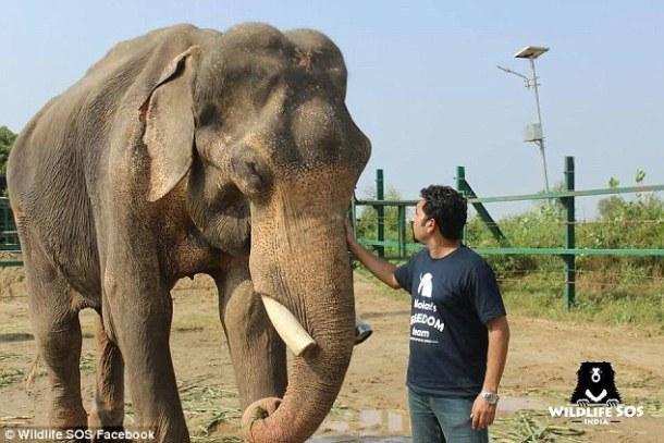 elephant-mohan-rescue-wildlife-sos-facebook