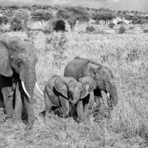 Earth Day : Our Elephants Belong Here, Too