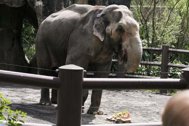 elephants packy oregon zoo birthday cake 2007 cc flickr