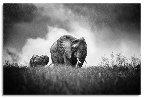 African Rain Storm CC Flickr by Deneys De Beer