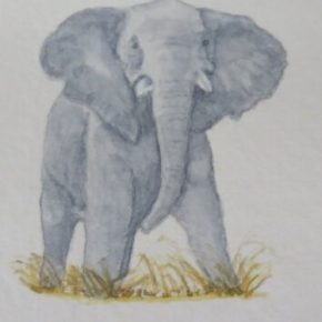 Short Tusked African Elephant by Addison : ACEO Original Watercolor Elephant Painting
