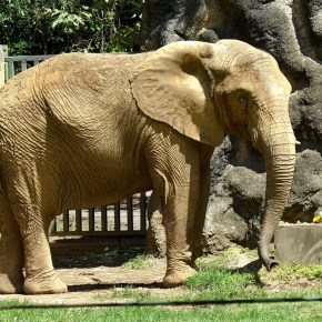 Help Bring Mundi the Zoo Elephant From Hurricane-Ravaged Puerto Rico to the New Home Waiting For Her at Elephant Refuge North America (ERNA) in Georgia