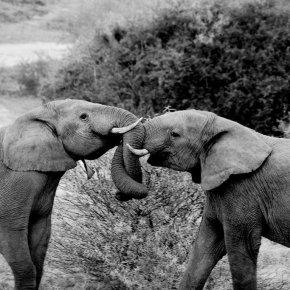 Elephant Spoken Here Has Moved to ElephantSpokenHere.Com