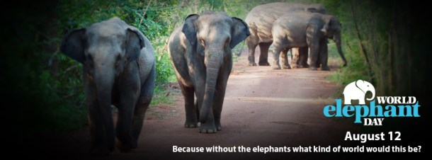 Happy World Elephant Day  Elephant Spoken Here