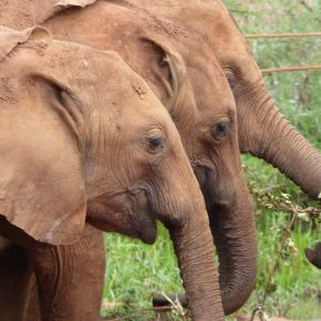 """Video Moment : """"GoPro : Orphan Elephants From Kenya""""  Will Tug at Your Heartstrings to Help Save African Elephants"""