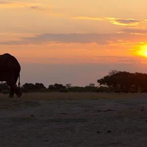 Elephant Population in Zimbabwe Facing Similar Deaths as Neighboring Country of Botswana, Bacterial Infection Suspected as Cause of Young Elephant Deaths