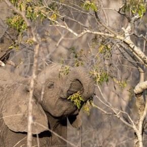 Elephant Spoken Here Makes Our Debut on Twitter @ESHelephants