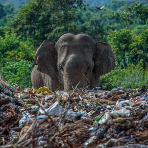 Earth Day 2021 'Restore Our Earth' For Our Elephants : Plastic Waste Kills Wildlife